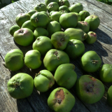 Allotment apples