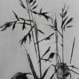 Honesty and Grasses