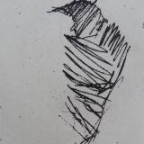 Scribble Bird