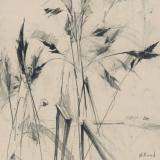Hillend grasses